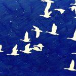 Vol d'oies cendrées, acrylique sur toile, 97x130cm, 1996, collection particulière