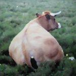Etude de vache|2014, encre sur toile, 130x130cm