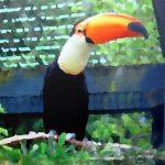 Etude de zoo|2015, encre sur toile, 80x80cm