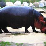 Etude de zoo, hippopotame, encre et acrylique sur toile, 97x130cm, 2015