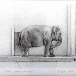 Roma, giardino zoologico, mine de plomb sur papier, 50x65cm, 2001, collection particuliére