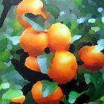Mandarinier, acrylique sur toile, 73x100cm, 2015