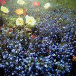 Flowers, acryl/toile, 100x100cm, 2019